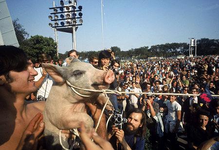 pigasus for president chicago 1968